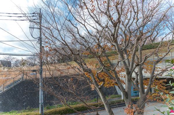 お庭スペースから尾根緑道を望む