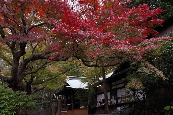 鎌倉宮の紅葉(令和元年12月1日撮影)